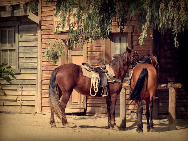 バーの本来の意味は「棒」や「横木」を指す。酒場の外に馬をつなぐための横木?